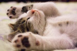 rustgevende verzorging anti stress en ontspanning
